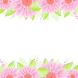 Pink Gerbers Stock Image