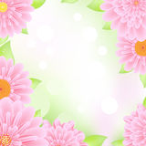 Pink Gerbers Frame Royalty Free Stock Images