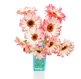 Pink gerbers in vase  on the white background Stock Photos