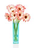Pink gerbers in vase  on the white background Stock Photo