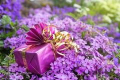 Pink gift atop a lot of lilacbush Royalty Free Stock Photos