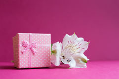 Pink gift box with single alstroemeria flower on crimson backgro Royalty Free Stock Images