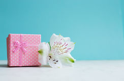 Pink gift box with single alstroemeria flower on mint background Stock Image
