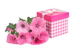 Pink gift paper box with flowers Lavatera Royalty Free Stock Photography