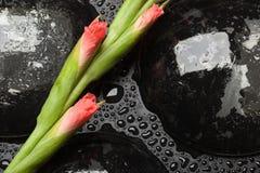Pink gladiolus Stock Photography