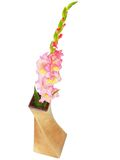 Pink gladiolus in vase . Isolated Stock Images