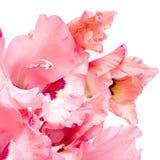 Pink gladiolus on white Royalty Free Stock Image