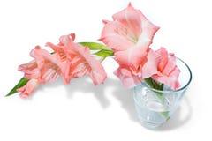Pink gladiolus  on white Stock Photos