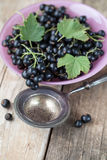 Pink glass bowl filled with fresh black currants and leaves Royalty Free Stock Photo