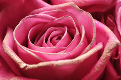 Pink glitter rose Stock Images