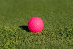 Pink golf ball on the edge of putting green stock photos