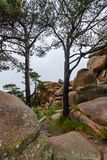 Coast of the Pink Granite, Ploumanach, Brittany, France. Pink Granite with trees, Ploumanach, Brittany, France Royalty Free Stock Photo