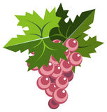 Pink grape bunch with leaves. Illustration of pink grape bunches with leaves Stock Photo