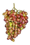 Pink grape cluster on white. Background Royalty Free Stock Photo