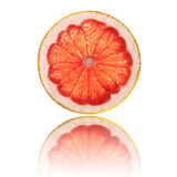 Pink grapefruit slice isolated on white background back lighted Royalty Free Stock Images