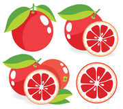 Pink grapefruits vector illustrations Royalty Free Stock Photo