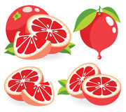 Pink grapefruits vector illustrations Royalty Free Stock Photos