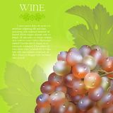 Pink grapes bunch with dew drops. Vector bunch of the fresh pink grapes with the green leaves and the dew droplets on a green background with glow flare, grape Royalty Free Stock Photography