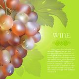 Pink grapes bunch with dew drops. Vector bunch of the fresh pink grapes with the green leaves and the dew droplets on a green background with glow flare, grape Royalty Free Stock Image