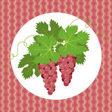 Pink grapes Royalty Free Stock Images