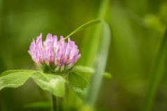 A macro shot of a small pink flower surrounded by green grasses. Good desktop wallpaper. stock photos