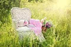 Pink, Grass, Meadow, Flower Stock Images