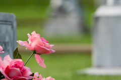 Pink grave flowers royalty free stock photo