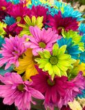 Pink Green Blue Multi Petaled Flowers Royalty Free Stock Photography