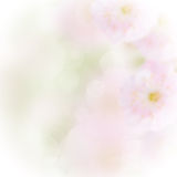 Pink and green bokeh background. With light beams royalty free stock photos