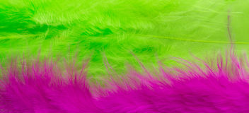 Pink and green Feather background, close up Royalty Free Stock Image