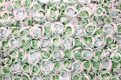 Pink, green and white roses as background Royalty Free Stock Photo