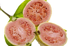 Pink Guava Fruit Royalty Free Stock Photos