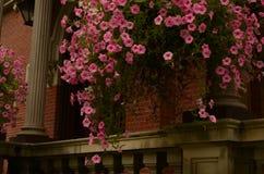 Pink hanging summer flower baskets porch pillars Royalty Free Stock Photography