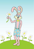 Pink hare. Happy pink hare in the funny shorts pics camomiles Stock Photo