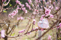 Pink Heart gift box on tree and flower  background. Valentine's Stock Images