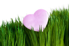Pink Heart and green grass Royalty Free Stock Image