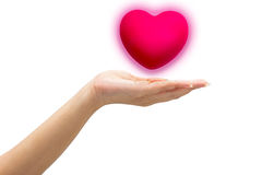 Pink heart in man hands,  on white background. Royalty Free Stock Photo