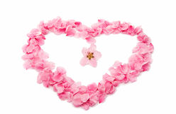 pink heart from the petals isolated Stock Images