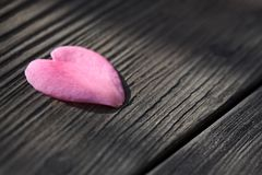 Pink Heart Shaped Flower Petal Stock Photos