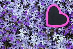 Pink heart with a violett flower background Stock Photography