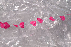 Pink hearts on string on ice Stock Photo