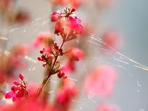 Pink Heather Stock Photo