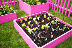 Pink herb garden Royalty Free Stock Photography