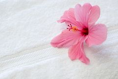 Pink hibiscus. A pink hibiscus on a towel hints a tropical, luxurious vacation Royalty Free Stock Images