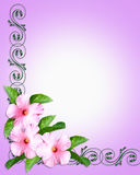 Pink Hibiscus border royalty free stock image