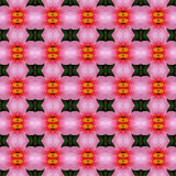 Pink hibiscus flower in full bloom seamless. Use as pattern and wallpaper vector illustration