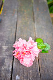 Pink hibiscus flower with leaves on wood background. Royalty Free Stock Photos