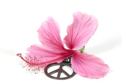 Pink Hibiscus Flower with Peace Pendant. Pink hibiscus flower with silver 1960s peace pendant as symbol of hippe movement Stock Photography