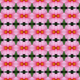 Pink hibiscus flower seamless. Pink hibiscus flower in full bloom seamless use as pattern and wallpaper vector illustration