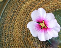 Pink Hibiscus Flower. On a table Royalty Free Stock Image